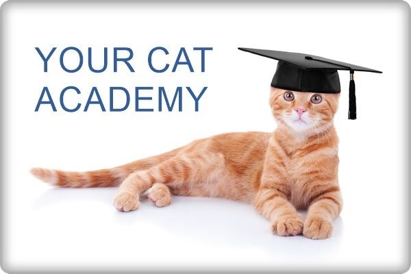 Your Cat Academy