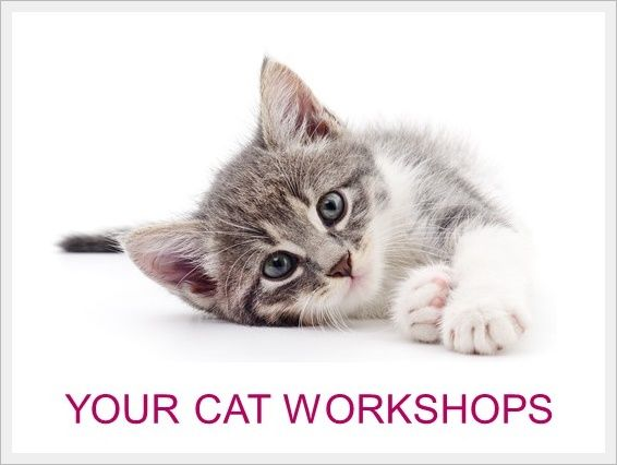 Your Cat Workshops